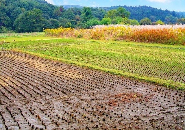 第5弾  テンフィールズファクトリーが「今農業投資」を勧める理由